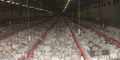 Preview broiler farm
